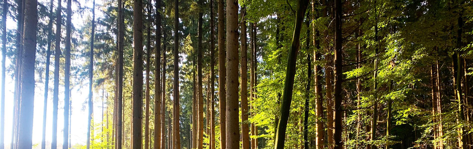 Wald in Kühbach